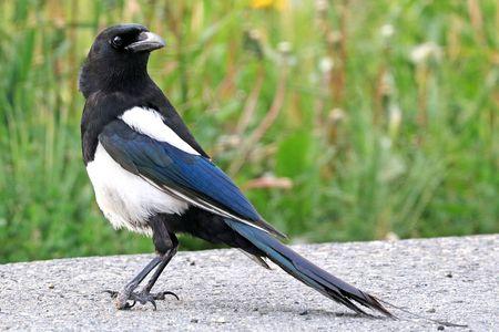 Bird Management